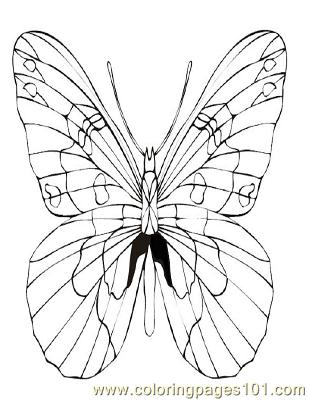 Butterflies064 Coloring Page