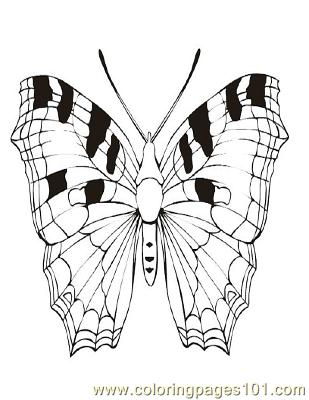 Butterflies066 Coloring Page