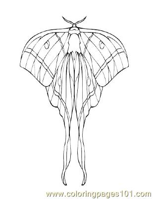 Butterflies070 Coloring Page