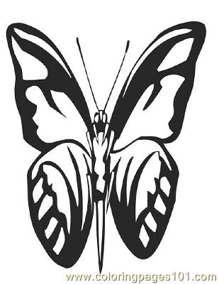 Butterflies075 Coloring Page