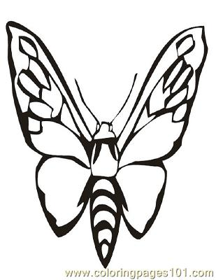 Butterflies078 Coloring Page