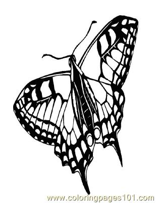 Butterflies085 Coloring Page