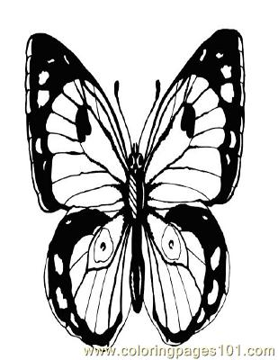 Butterflies086 Coloring Page
