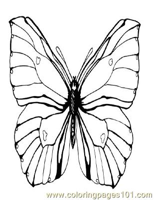 Butterflies091 Coloring Page