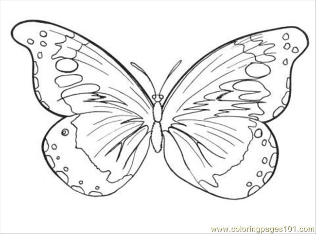 Coloring Page Of Painted Lady Butterfly