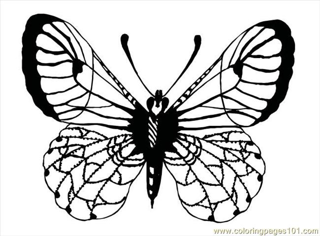 Butterfly91 Coloring Page