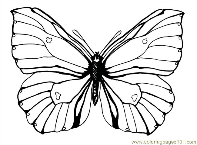 Butterfly92 Coloring Page