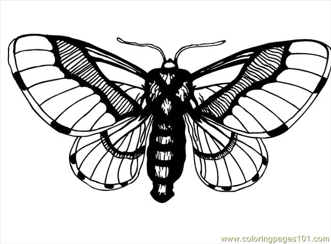 Butterfly95 Coloring Page