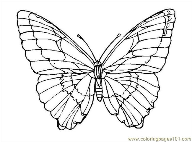 Butterfly (2) Coloring Page