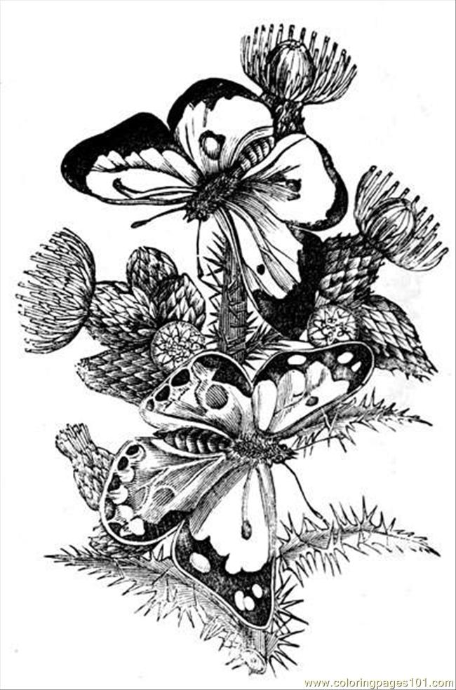 Butterfly Art 6 Coloring Page