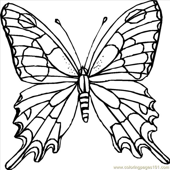 Butterfly Coloring Page Coloring Page Free Butterfly Coloring Pages Coloringpages101 Com