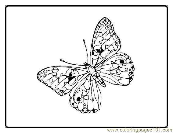 Butterfly. Coloring Page