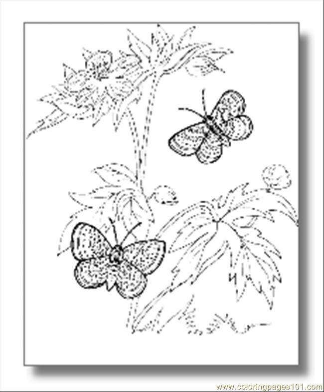 Butterfly Coloring Pages08 Coloring Page