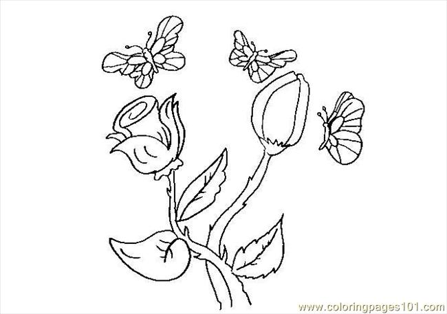 Butterfly Coloring Pages 2 Coloring Page