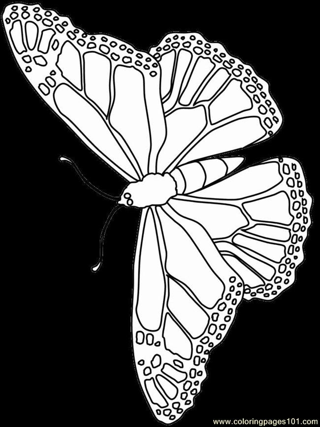 Butterfly Coloring Pages Coloring Page