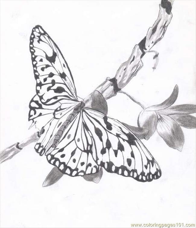 Butterfly Josh Bennett Coloring Page