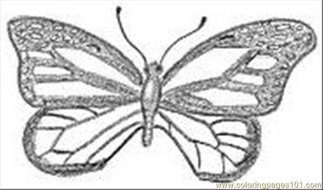 Butterfly Pencil Drawings Coloring Page