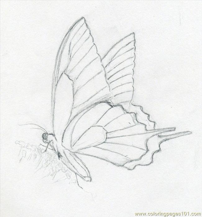 Butterfly Sketch03 Coloring Page