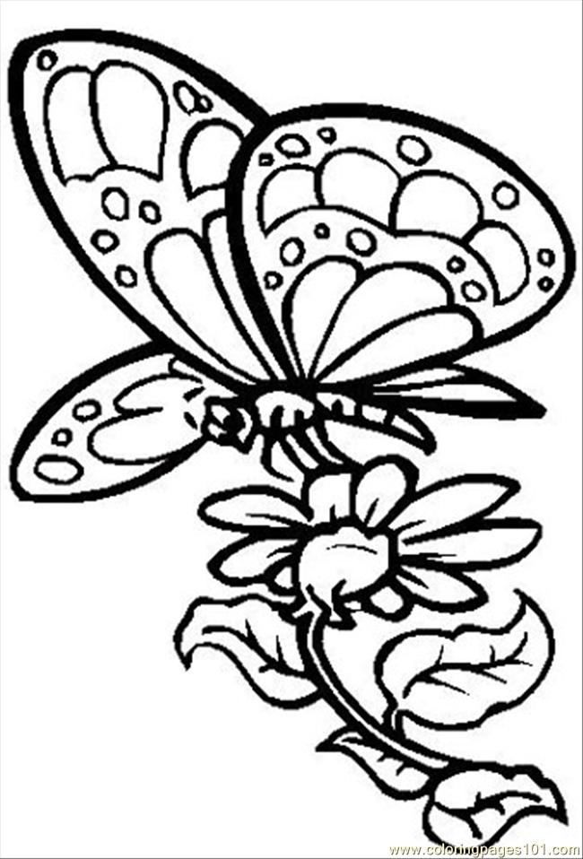 butterfly with flower coloring page