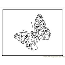 176 Tterfly Coloring Pages00003im