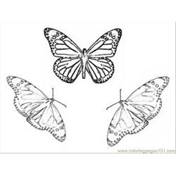 Arch Butterfly Coloring Pages