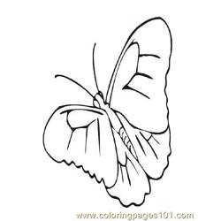 Butterflies028 coloring page