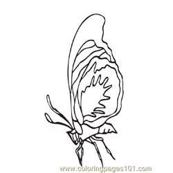 Butterflies031 coloring page