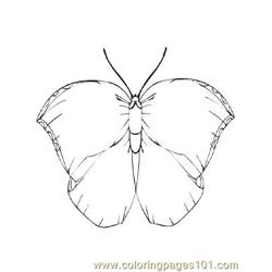 Butterflies032 coloring page