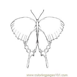 Butterflies033 coloring page