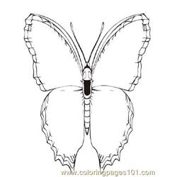 Butterflies035 coloring page