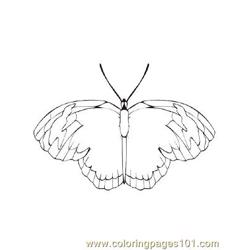 Butterflies037 coloring page