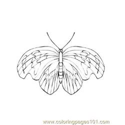 Butterflies038 coloring page