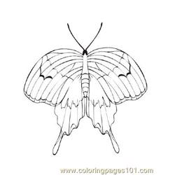 Butterflies039 coloring page