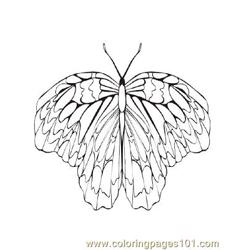 Butterflies041 coloring page