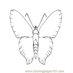 Butterflies042 coloring page