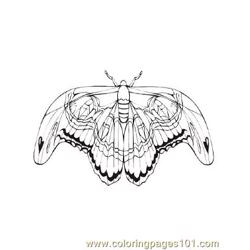 Butterflies044 Free Coloring Page for Kids