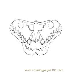 Butterflies045 coloring page