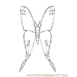 Butterflies046 coloring page