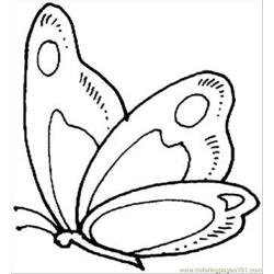 Butterfly 9 Coloring Page