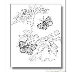 Butterfly Coloring Pages08