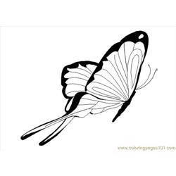 Butterfly Coloring Pages 276