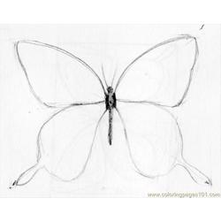 Butterfly Drawing 05