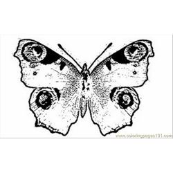 Ock Butterflycoloring Pages 1
