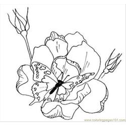 Rfly Flowers Coloring Pages L