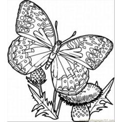 Terfly Coloring Pages 12 Med