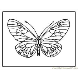 Tterfly Coloring Pages 17 Med
