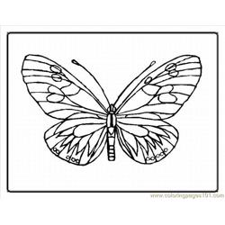 Tterfly Coloring Pages 1lrg