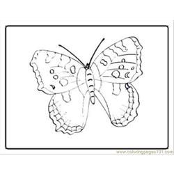 Tterfly Coloring Pages 26 Med