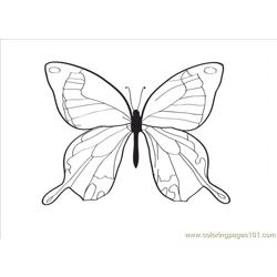 Tterfly Drawing Coloring Page