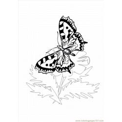 Utterfly Coloring Pages 1